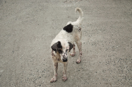 skin disease: Skin disease dog on concrete