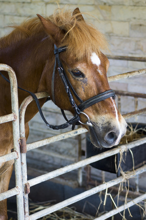 horse stable: Horse stable