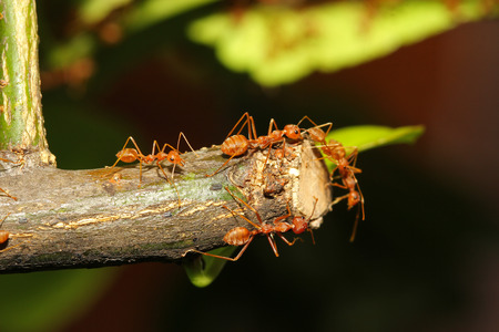 group ant on tree photo
