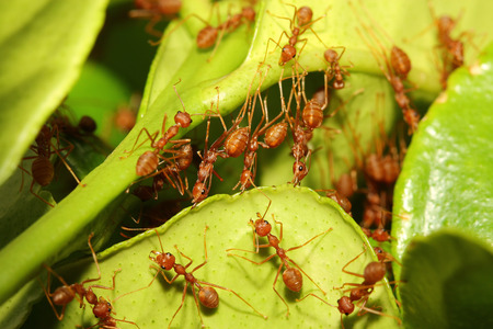 ant build home from leaf