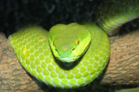 green snake 写真素材