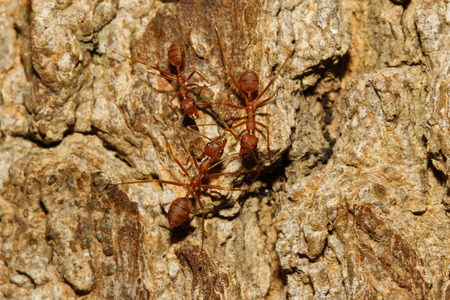 ants walking on a wood photo