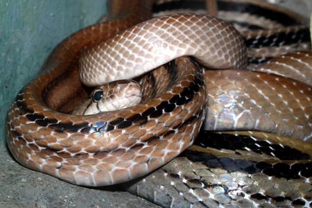 snake head: Snake head close up picture Stock Photo