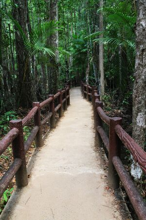 turf bog: The educational nature trails in thailand Stock Photo