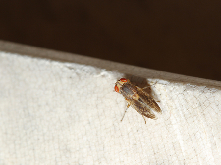 domestics: brown fly on the rock Stock Photo