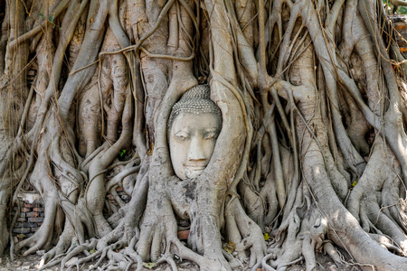 head budda status in tree roots at thailand Stock Photo