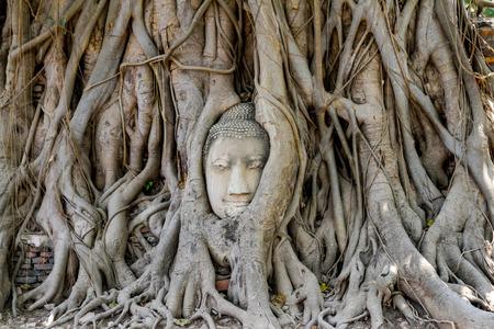 statut de tête de budda dans les racines des arbres en thaïlande Banque d'images