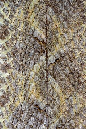 Snake skin reptile for pattern 版權商用圖片