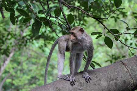 The monkey stop on big branch tree in nature at thailand 免版税图像