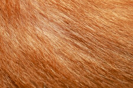 close up brown dog skin for texture and pattern. Stok Fotoğraf