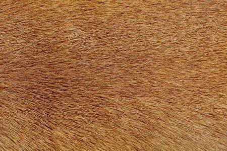 gros plan sur la peau de chien marron pour la texture et le motif.