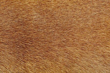 primo piano pelle di cane marrone per consistenza e motivo.