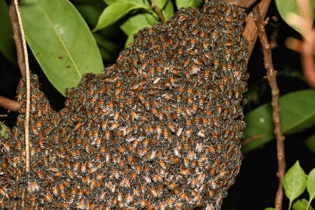 Close up group bee nest in garden at thailand 写真素材