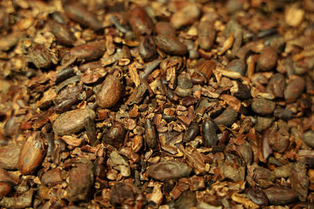 The coco seed for background Foto de archivo