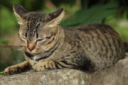 Close up head gray cat is sleep on the wall