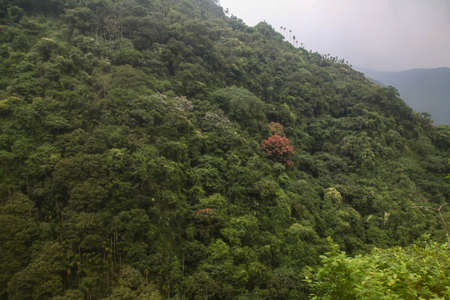View of forest and mountain in national park in taiwan