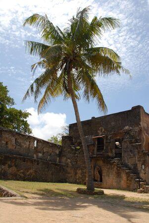 Big Palm Tee Growing in Fort Jesus