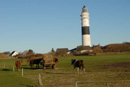 Lighthouse and Horses