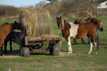 Pferde eine eine Weide  Standard-Bild - 7712114