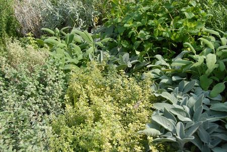 Mediterranean herbs Stock Photo