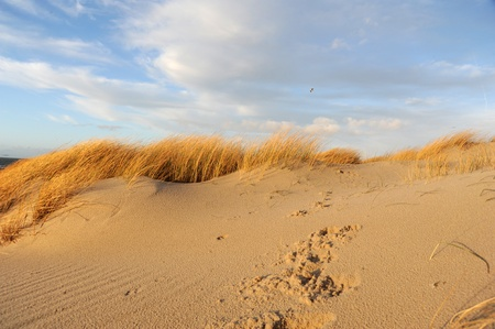 Sand dune and dune grass on Sylt