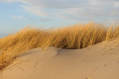 Sanddüne und Dünengras auf Sylt Standard-Bild - 12024999