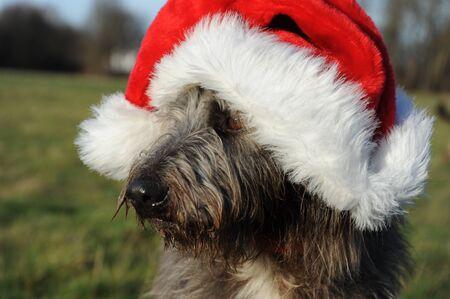 Dog Portrait with Santa Hat