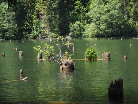 The Red Lake Lacu Rosu in Romania Standard-Bild - 124642289