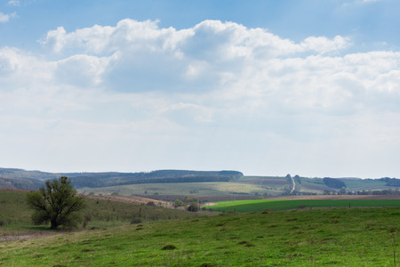 Sunny spring day in nature, fields and meadows, natural background, landscape