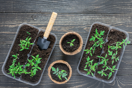 Eco friendly pots with young tomato sprouts and garden trowel on wooden background