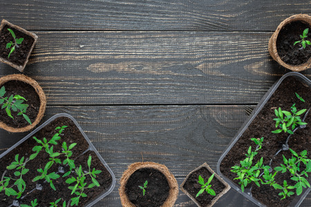 Eco friendly pots with young tomato sprouts on wooden background