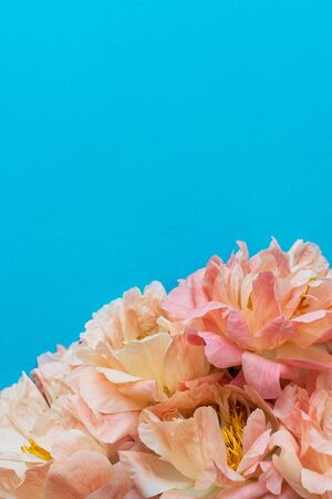 Top view on bouquet of peonies , flowers on blue background, flat lay, copy space
