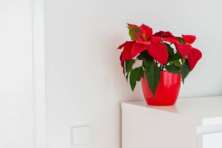 Part of the home interior, chest of drawers with flower poinsettia in red pot Stock Photo