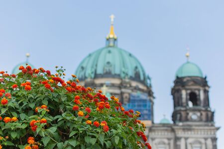 Beautiful flowers in the park Lustgarten , view of the Berliner Dom on Museum Island, Germany