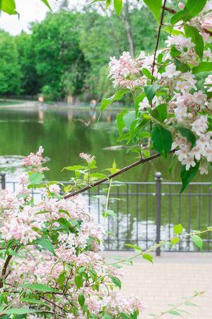 Walk on a warm sunny day in the park Volkspark Friedrichshain, lake in the park Stok Fotoğraf
