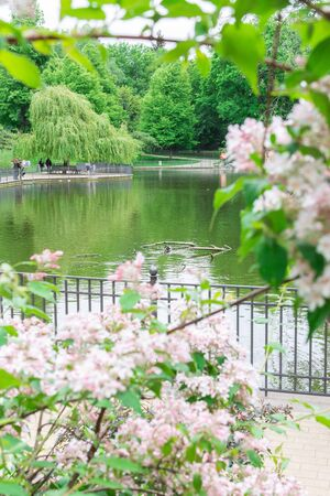Walk on a warm sunny day in the park Volkspark Friedrichshain, lake in the park with ducks Stok Fotoğraf