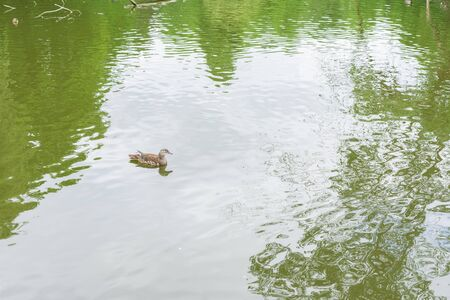 Lake in the park Volkspark Friedrichshain in Berlin, duck swimming in the lake