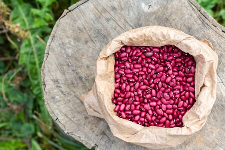 Fresh harvest of pink beans in a bag lies on a tree stump, organic vegetables from the garden Stok Fotoğraf