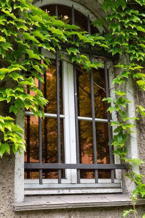 Wall with a window of the building with climbing greenery in the Friedrichshain district of Berlin, Germany