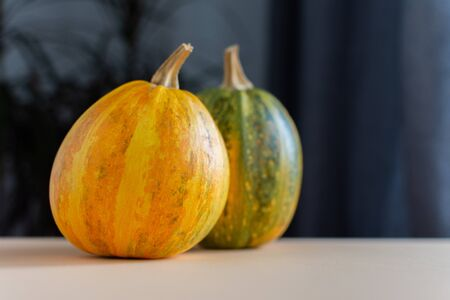 Orange ripened pumpkins closeup, fresh organic vegetables from the garden 版權商用圖片