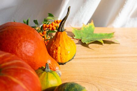 Autumn background with colorful pumpkins and leaves of maple, oak and rowan