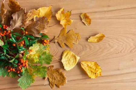 Fallen leaves of trees and orange rowan on a wooden background, autumn background