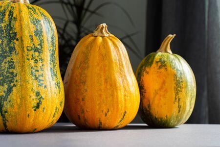 Orange ripened pumpkins closeup, fresh organic vegetables from the garden Stock fotó
