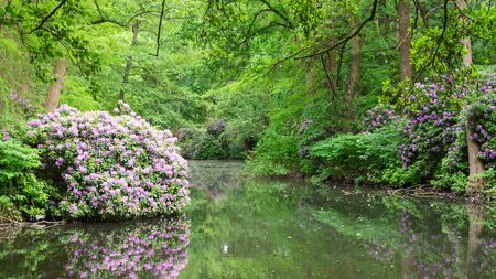 The Tiergarten, walk through the green beautiful park in central Berlin, beautiful large bushes with flowers near the river Stock Photo