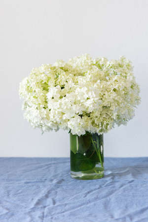 Flowers viburnum opulus Roseum in a vase standing on a table with a blue tablecloth on a white wall background