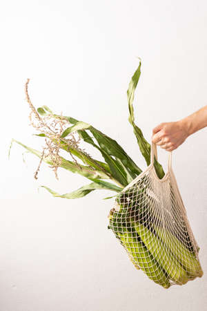 Male hand with with corn on a white wall background, farmer holds raw corn swings with green leaves, fresh harvest
