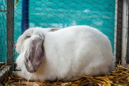 rabbit cage: Immagine a colori di un coniglio bianco in una gabbia Archivio Fotografico