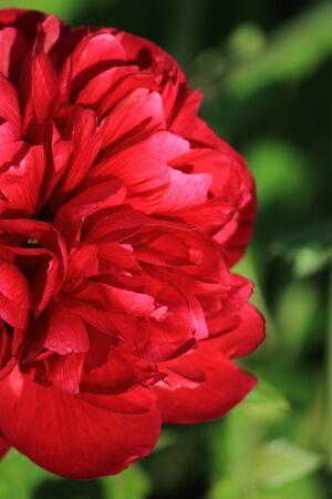 Flower Nature Banco de Imagens - 24849814