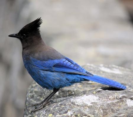 Nature Bird photo
