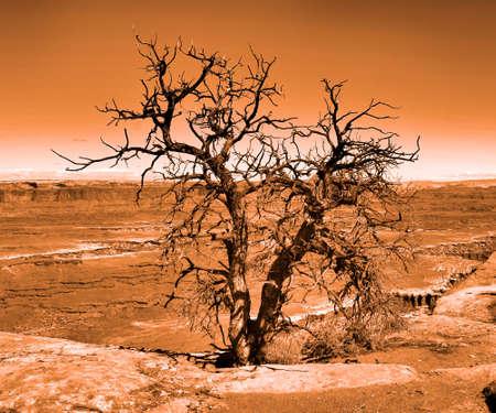 tree dead: Albero morto in Canyonlands Archivio Fotografico